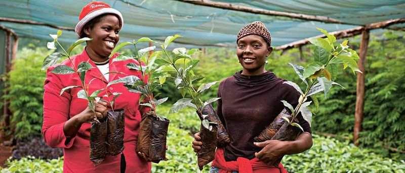 ایدههای کار آفرینی در کشاورزی