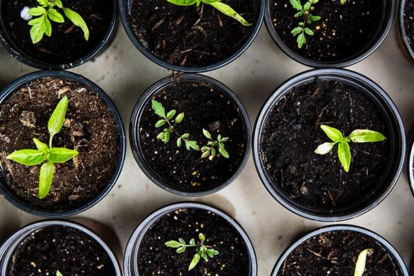 پرورش گیاهان دارویی در خانه